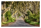 Robert_Elm-Dark_Hedges